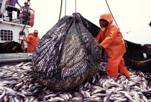 Peru fishing